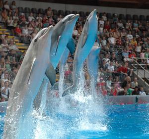 Dolfijnenshow
